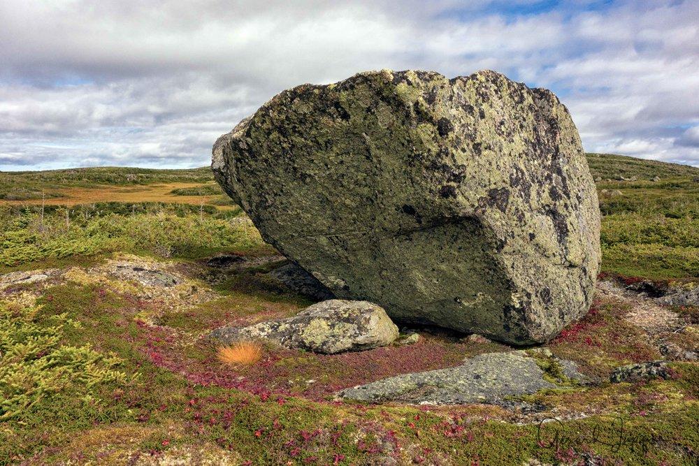 Newfoundland-101.jpg