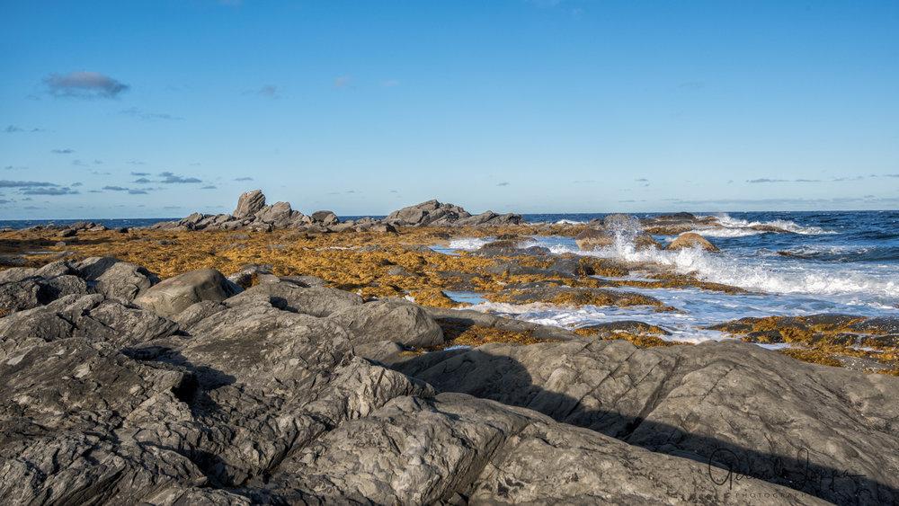 Newfoundland-103.jpg