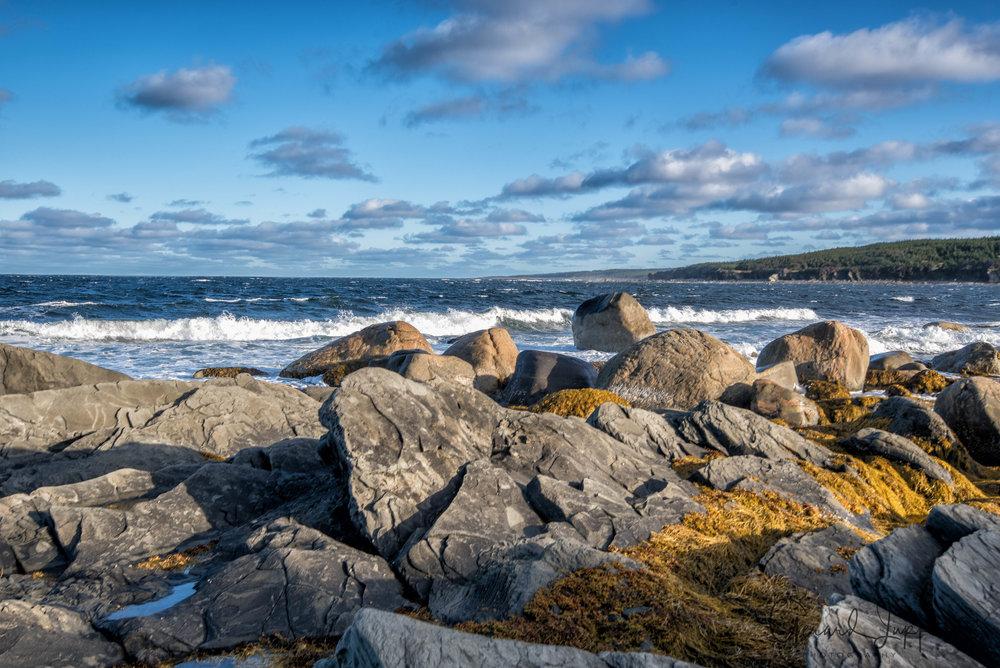 Newfoundland-102.jpg