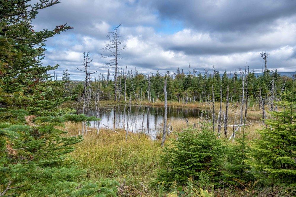 Newfoundland-108.jpg