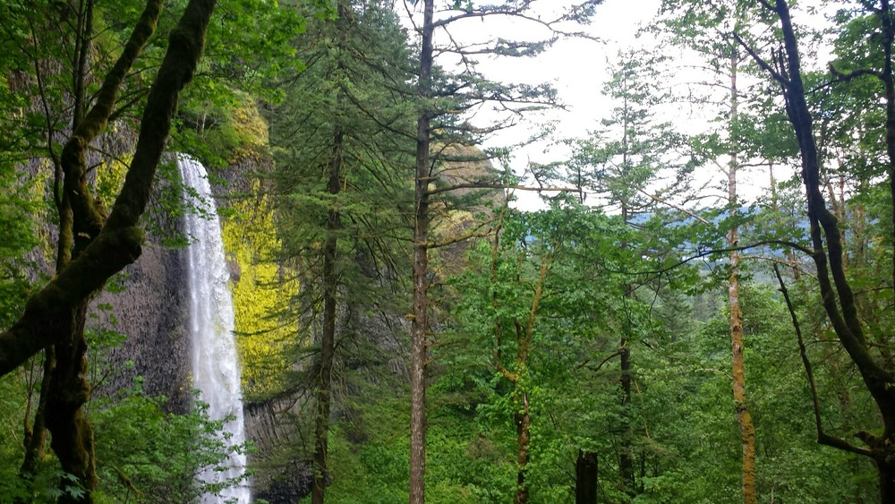Hike past a waterfall near the Columbia River Gorge