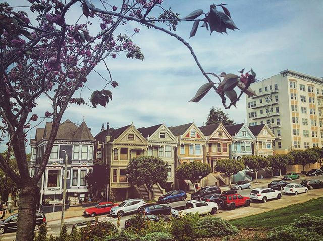 Painted Ladies. Yesterday was literally my first time to Alamo Square to see these babies! #tourist