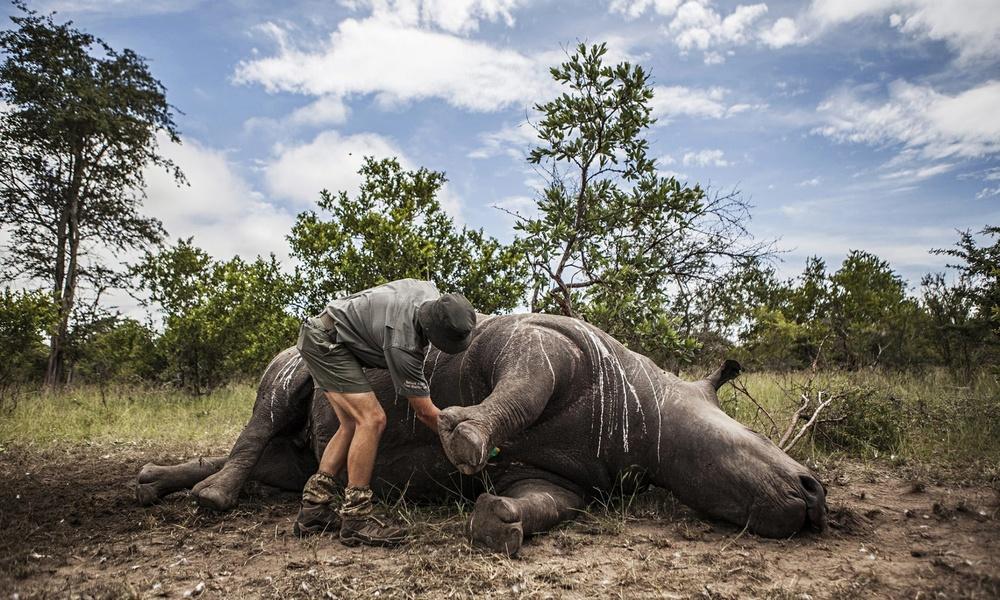 41-rhinos-killed-for-horn-009.jpg