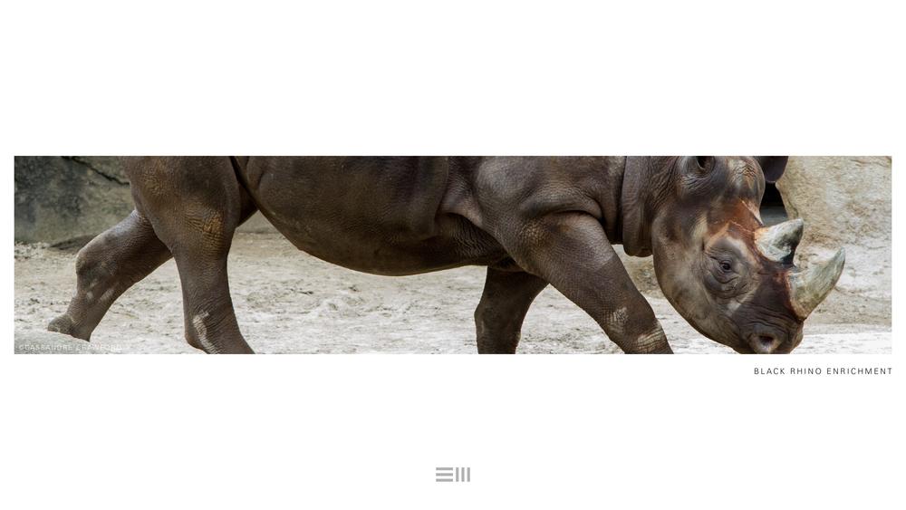 Seyia Project_Black Rhino_Design Options3.png