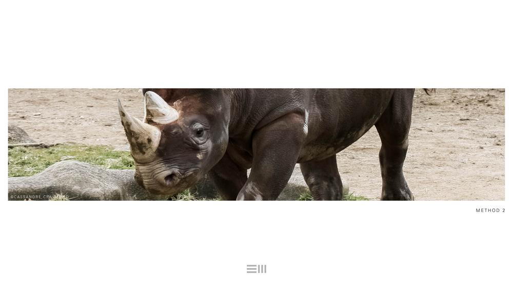 Seyia Project_Black Rhino_Design Options15.png