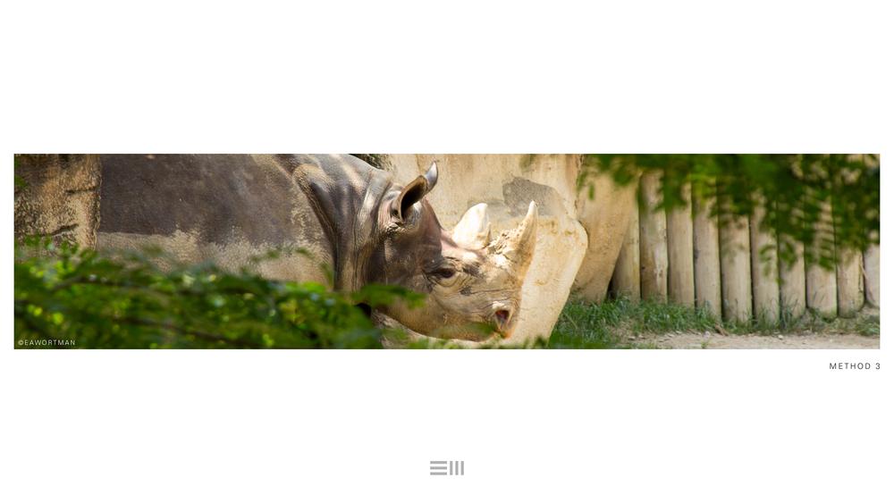 Seyia Project_Black Rhino_Design Options19.png