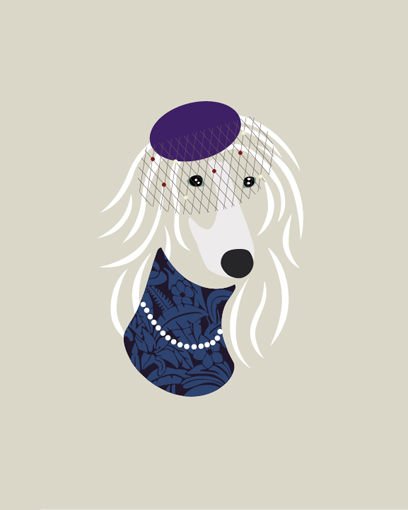 Elegant Afghan Hound - Pacific Heights