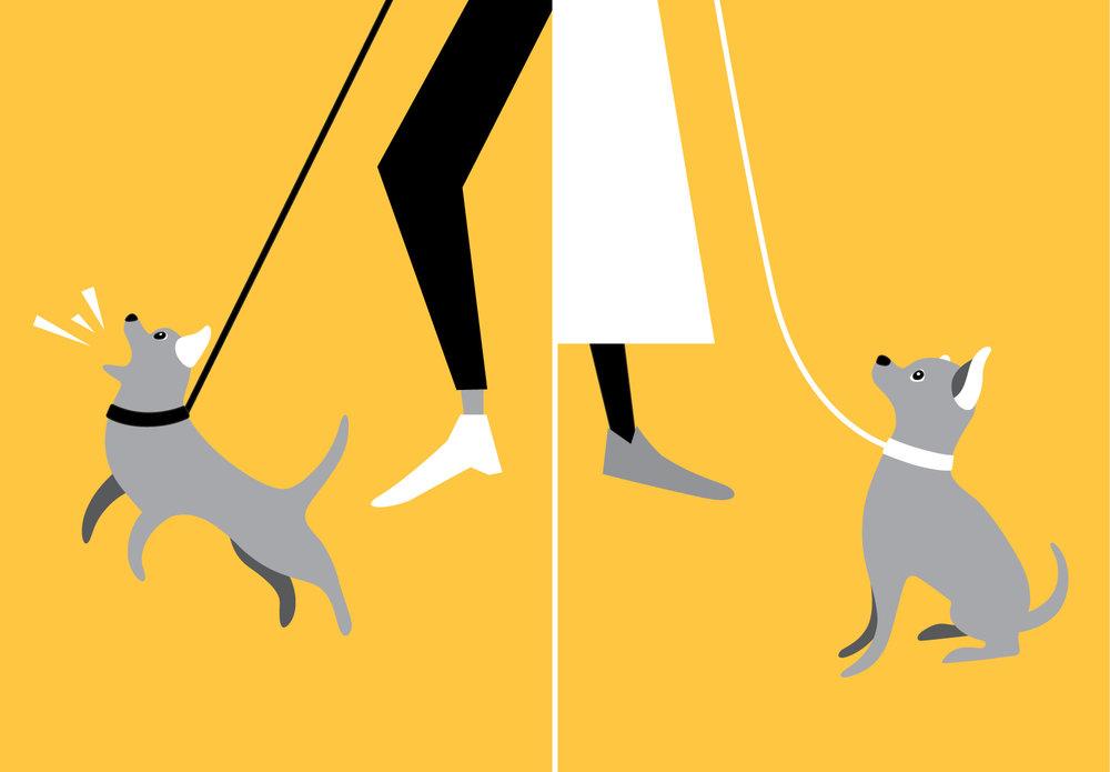 woofmodels-san-francisco-spca-dog-behave.jpg