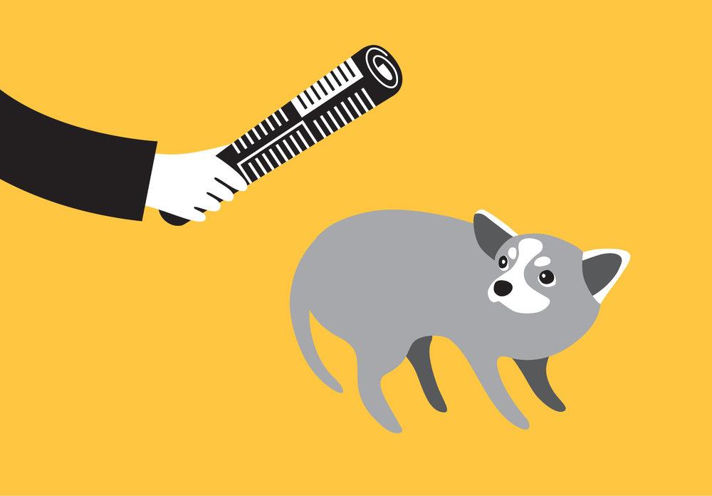woofmodels-san-francisco-spca-dog-abuse.jpg