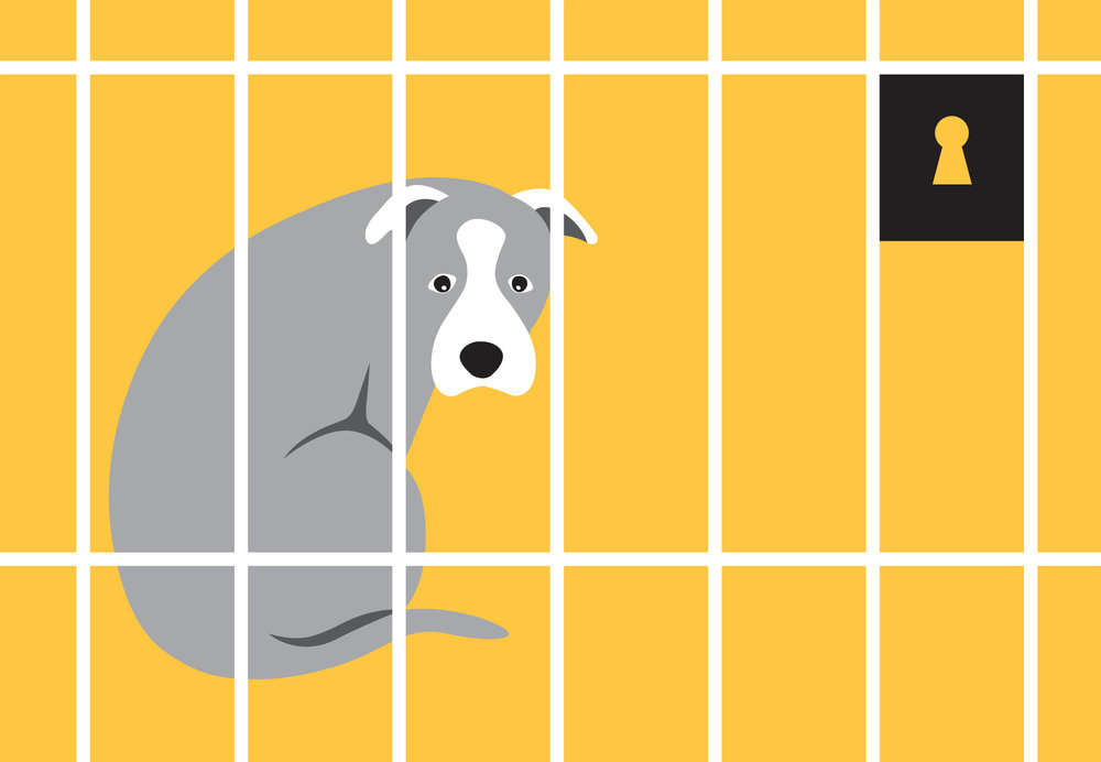 woofmodels-san-francisco-spca-dog-shelter.jpg