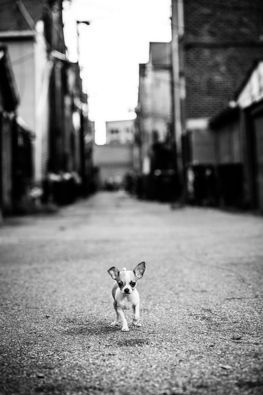 Chihuahua, Pilsen, Chicago, IL