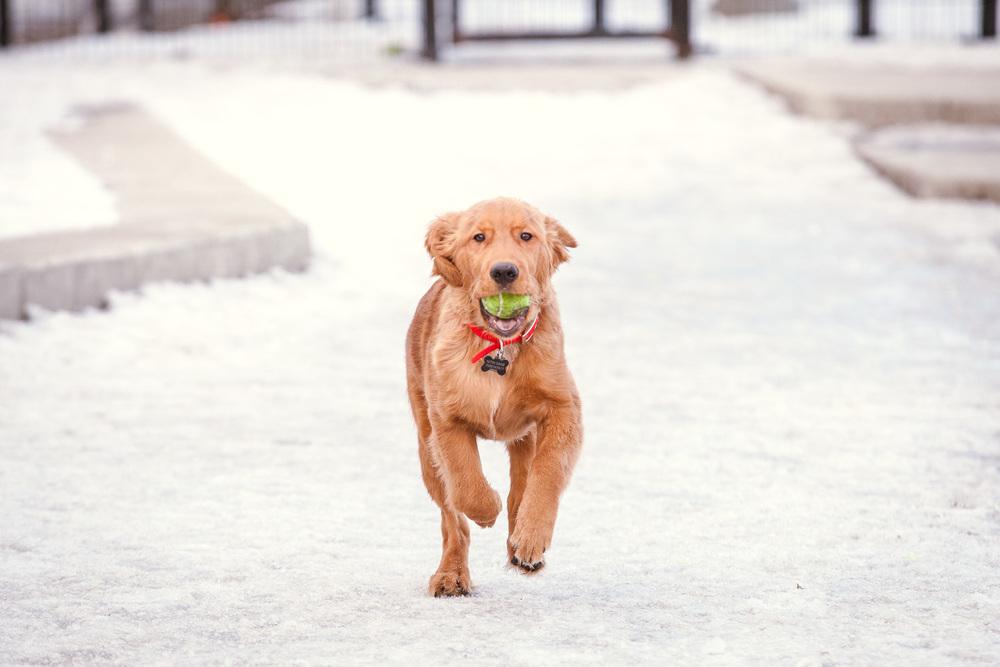 dog-park-02-25-14-2