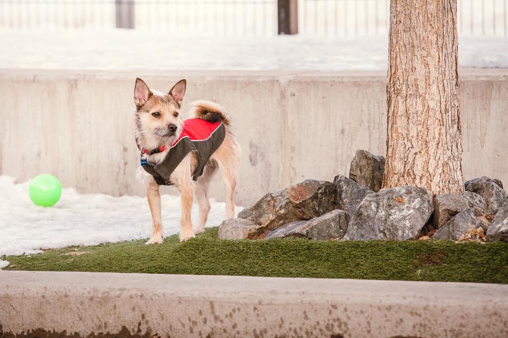 dog-park-02-25-14-3