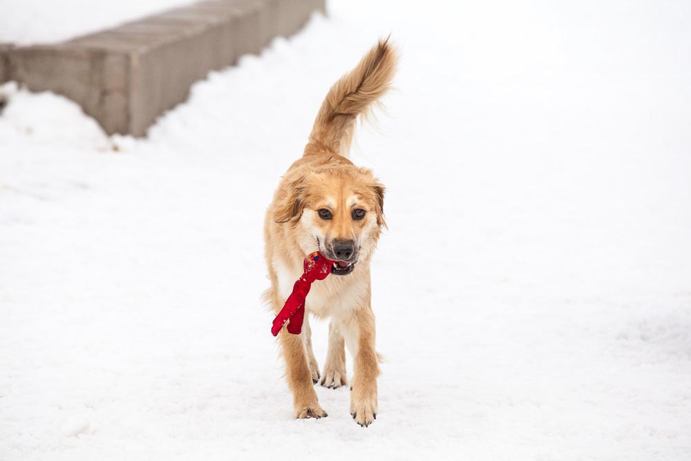 dog-park-02-18-14-2