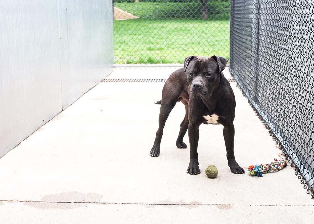 dog-foster-05-16-14-mister-4