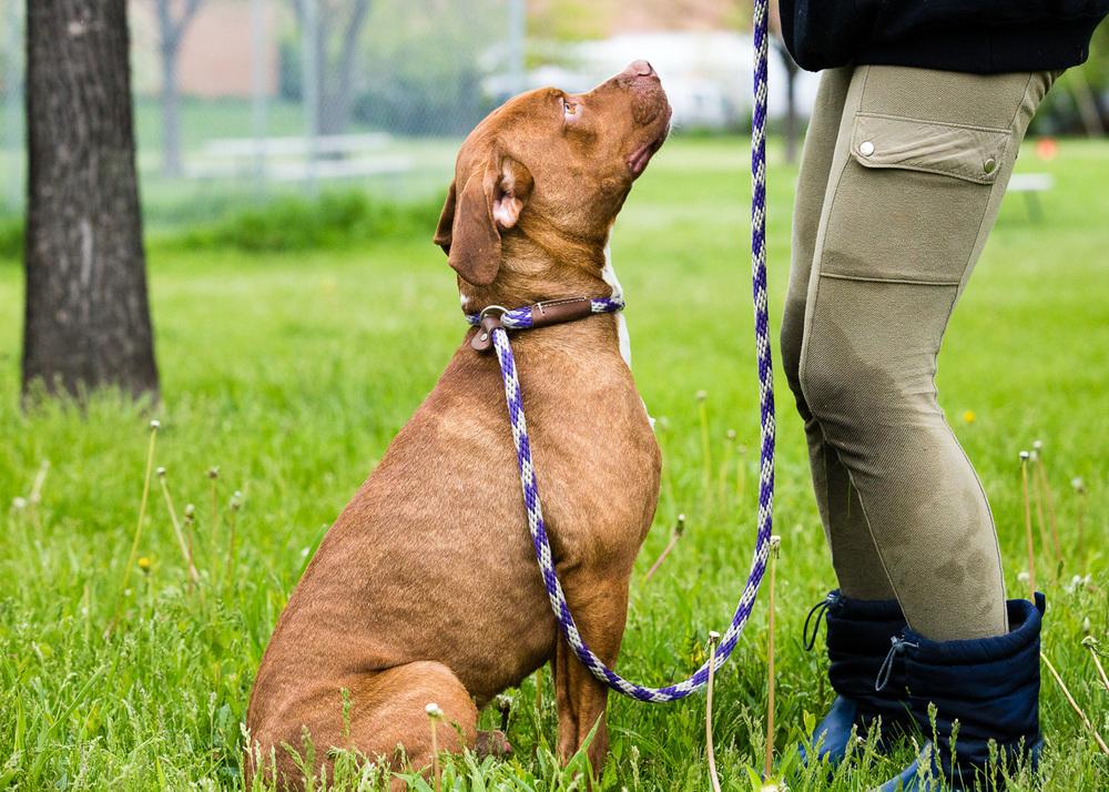 dog-foster-05-17-14-roosevelt-1