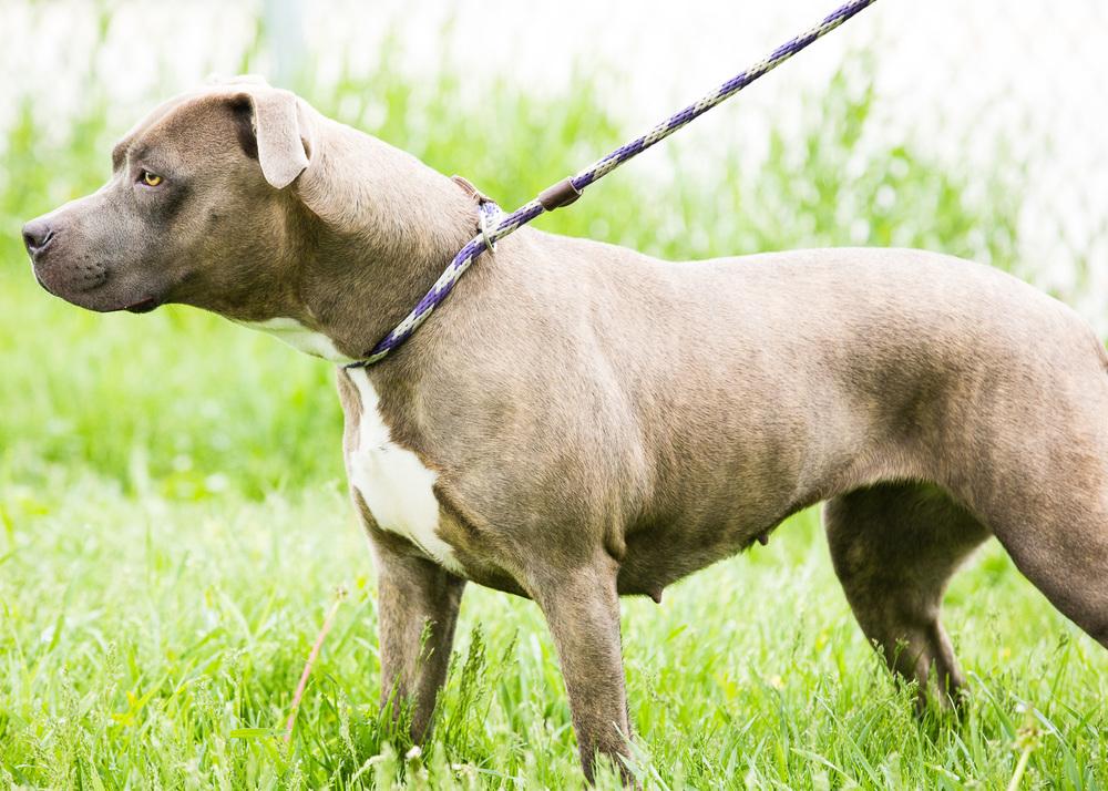 dog-foster-05-17-14-mama-2