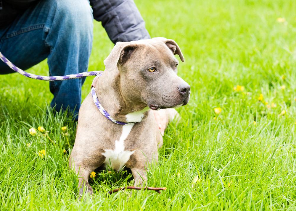 dog-foster-05-17-14-mama-3