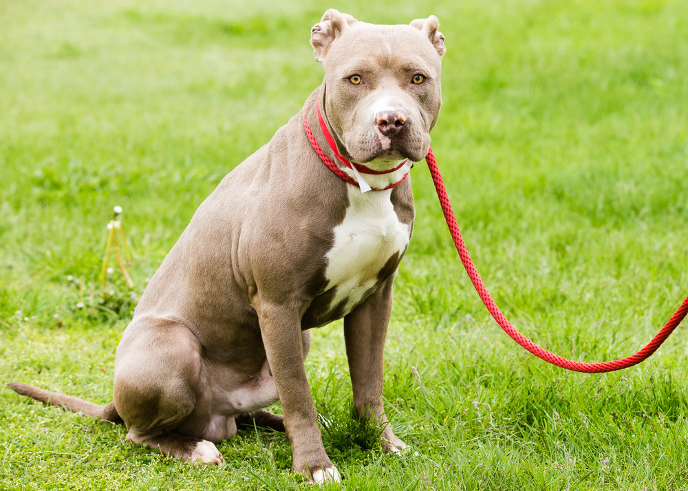 dog-foster-05-17-14-rizzo-3