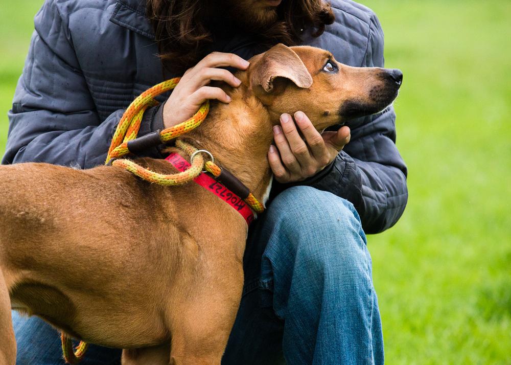 dog-foster-05-17-14-ramses-3