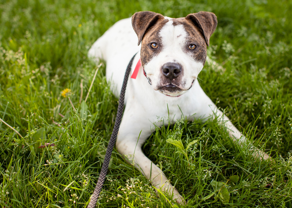 dog-adoptable-05-30-14-flynn-1