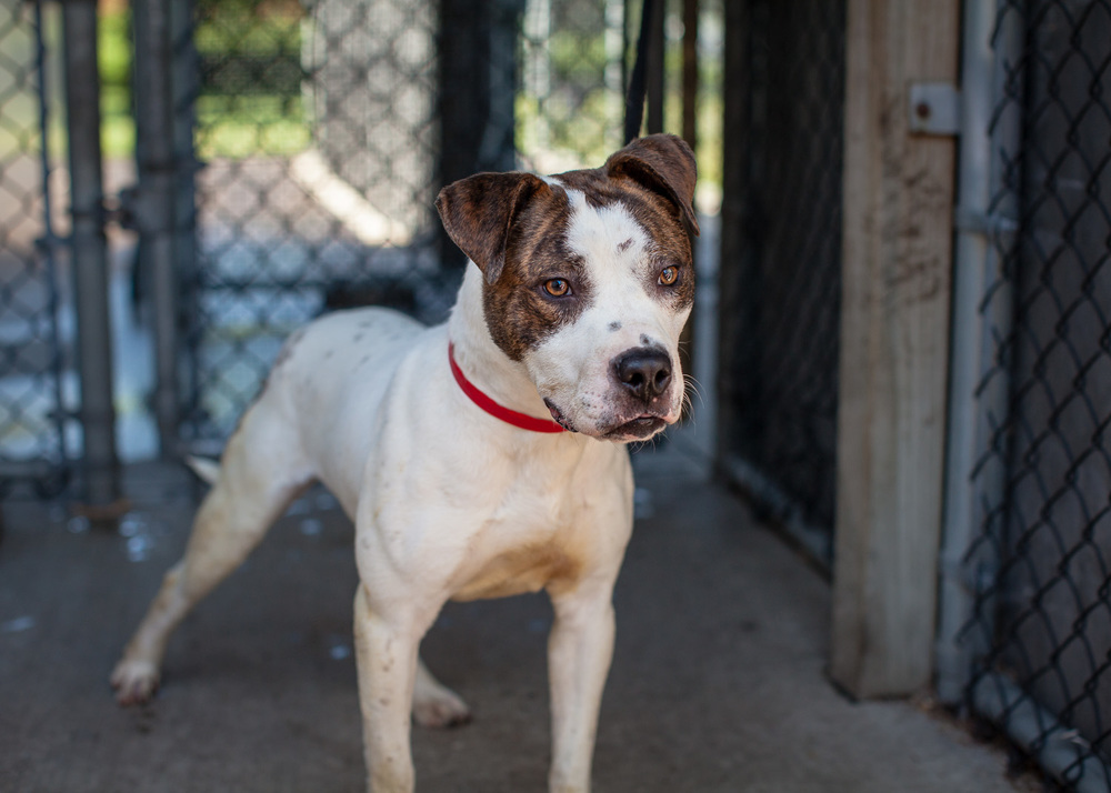 dog-adoptable-05-30-14-flynn-3