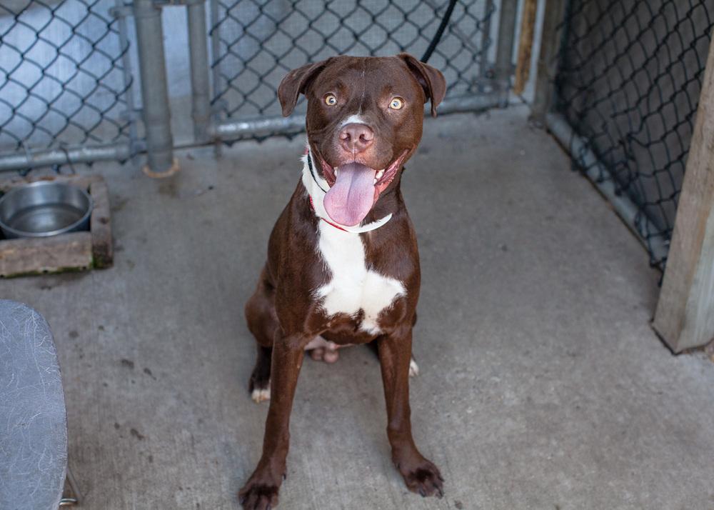 dog-adoptable-05-30-14-chuck-1