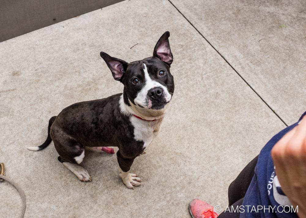 dog-adoptable-06-15-14-brian-1