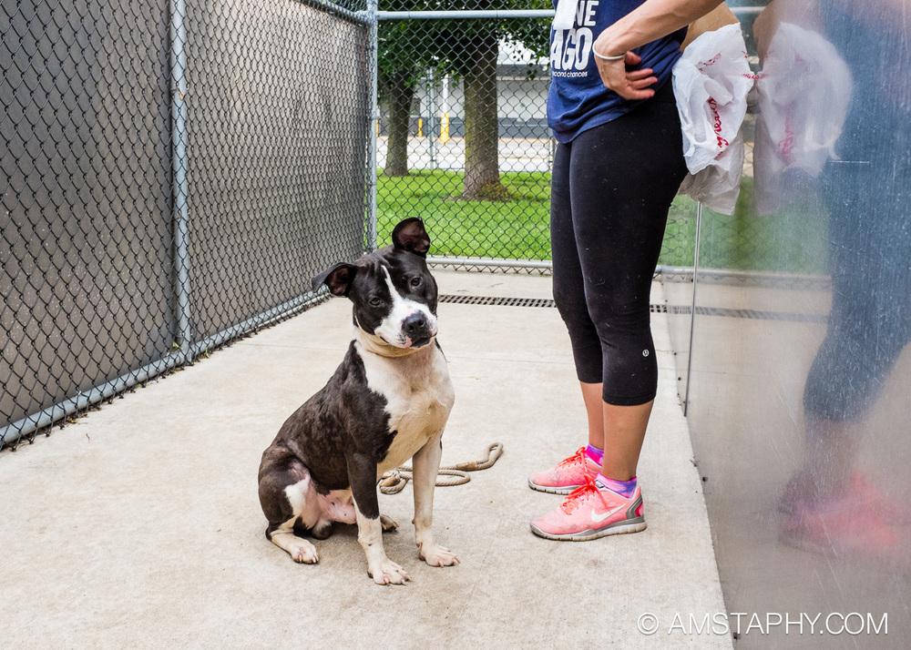 dog-adoptable-06-15-14-brian-3