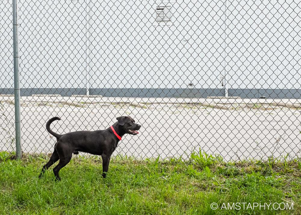 dog-adoptable-06-15-14-louis-2