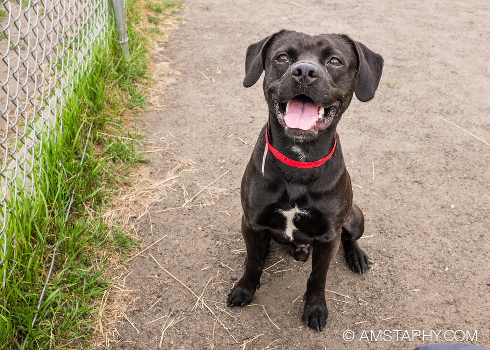 dog-adoptable-06-15-14-louis-3