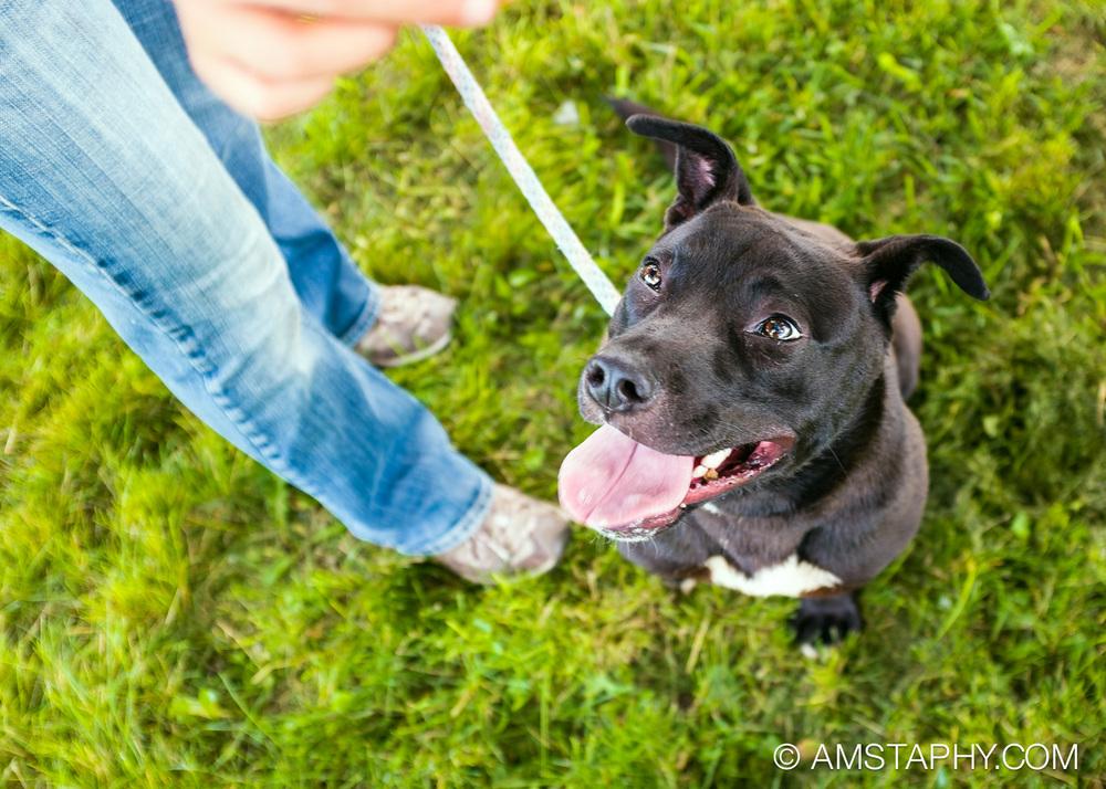 dog-adoptable-06-26-14-kodiak-3