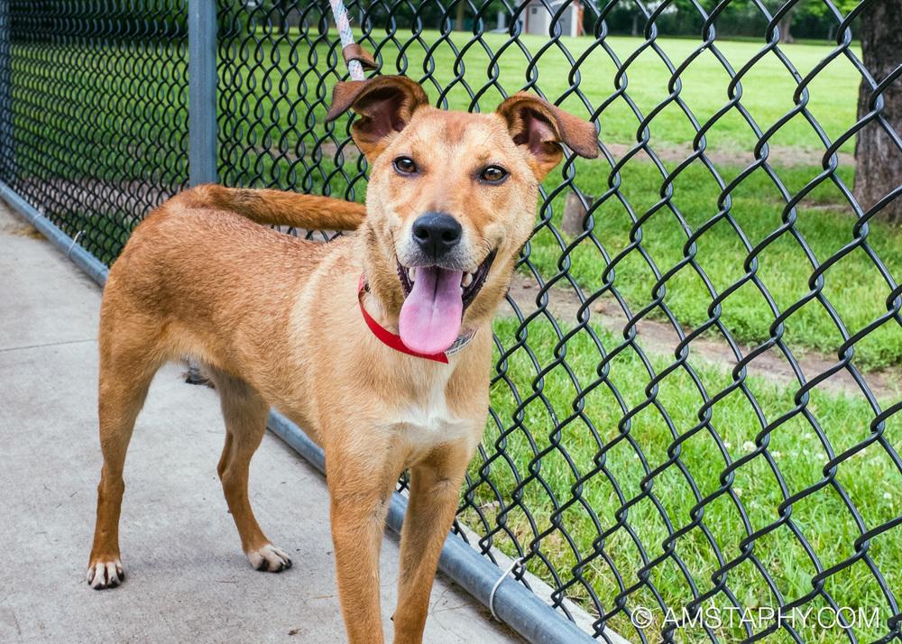 dog-adoptable-06-26-14-bobo-3