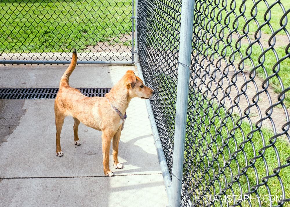 dog-adoptable-06-26-14-bobo-4