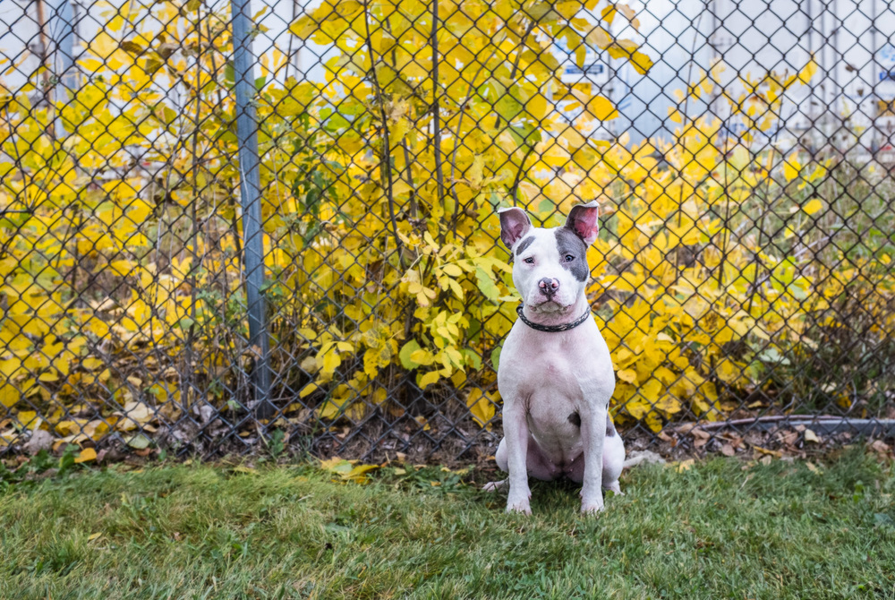 Patch at Chicago Animal Care & Control