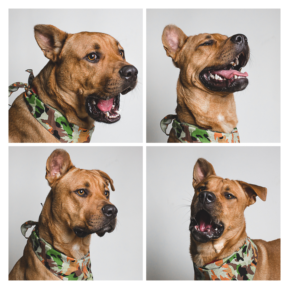 Chicago Pet Photographer