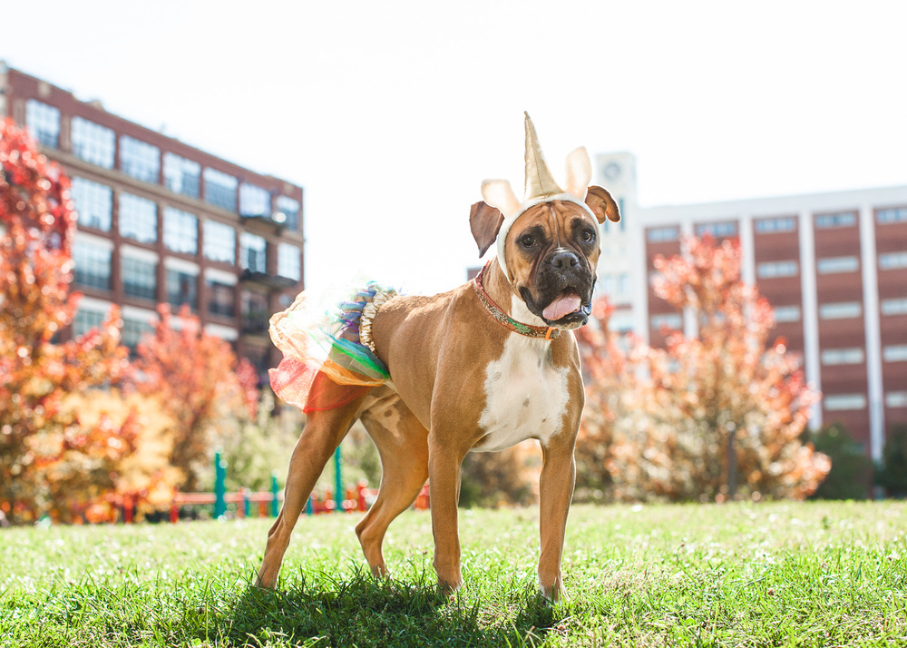 Halloween Dog Photography