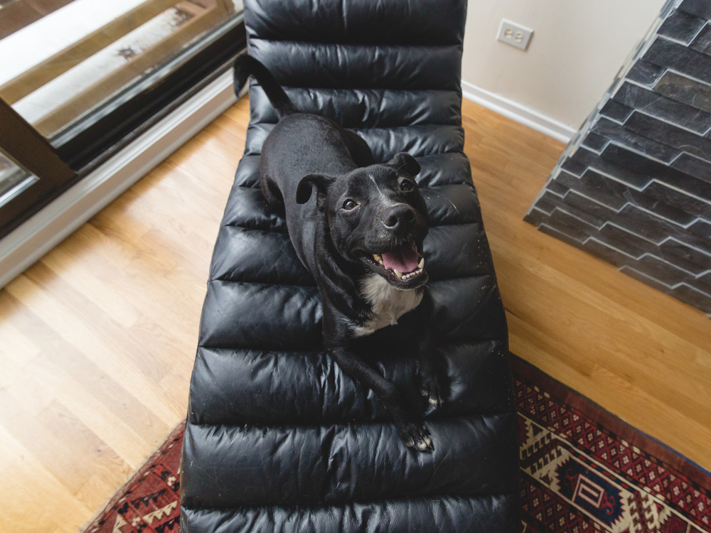 Hobbes, Rain Dog Rescue