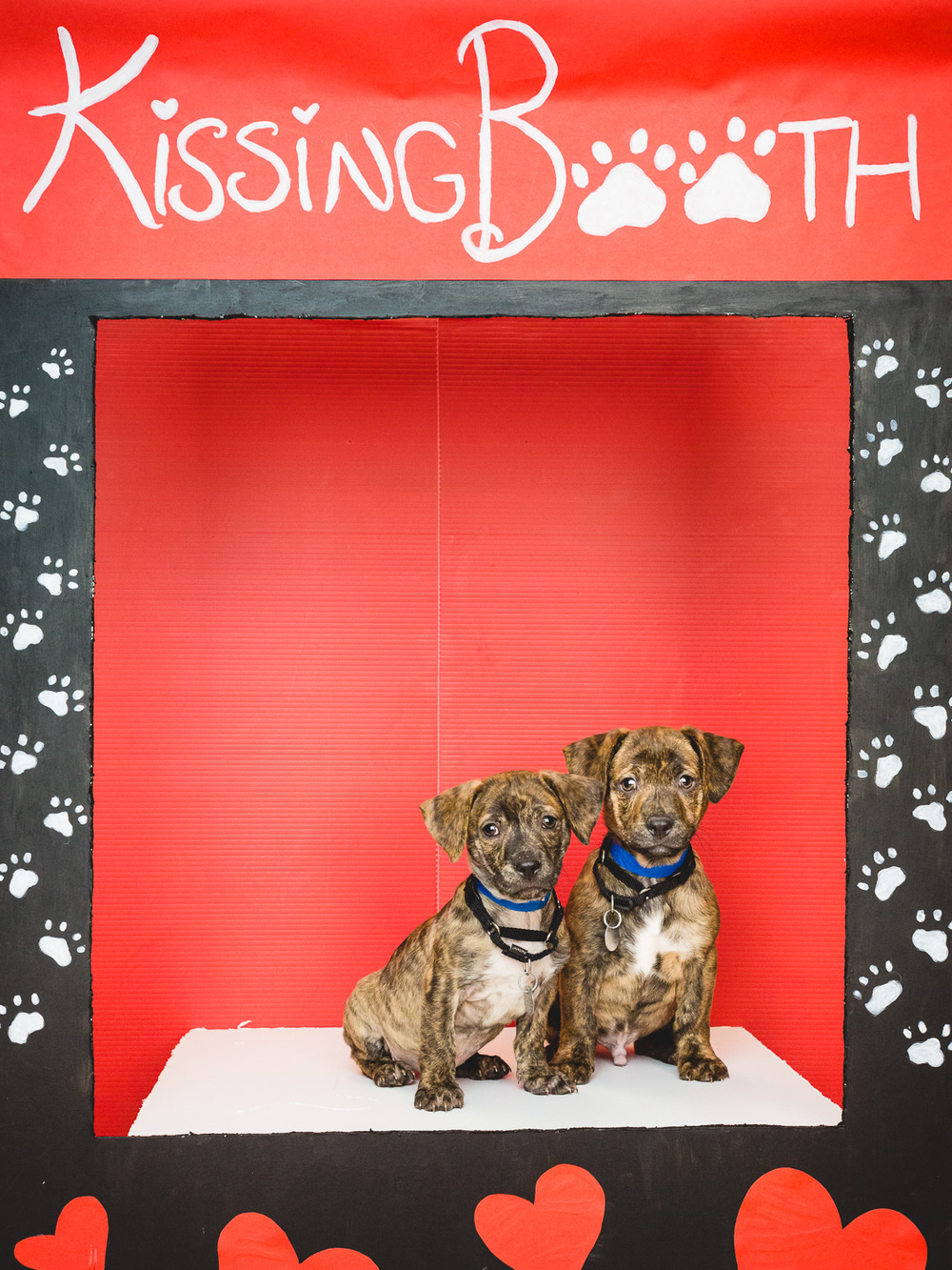 Valentine S Day Dog Kissing Booth