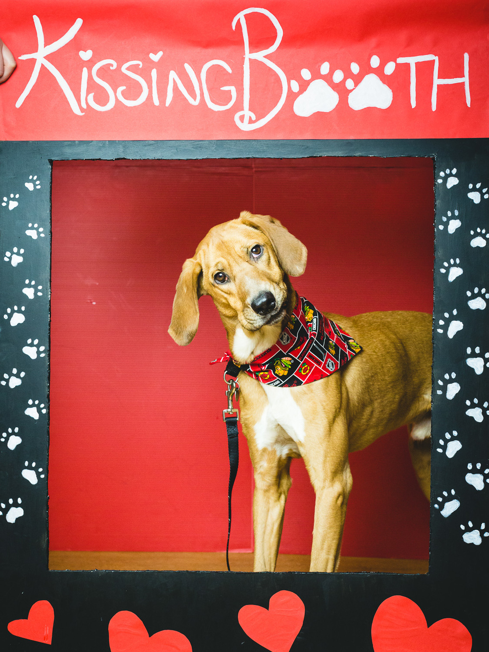 Dog Kissing Booth In Chicago