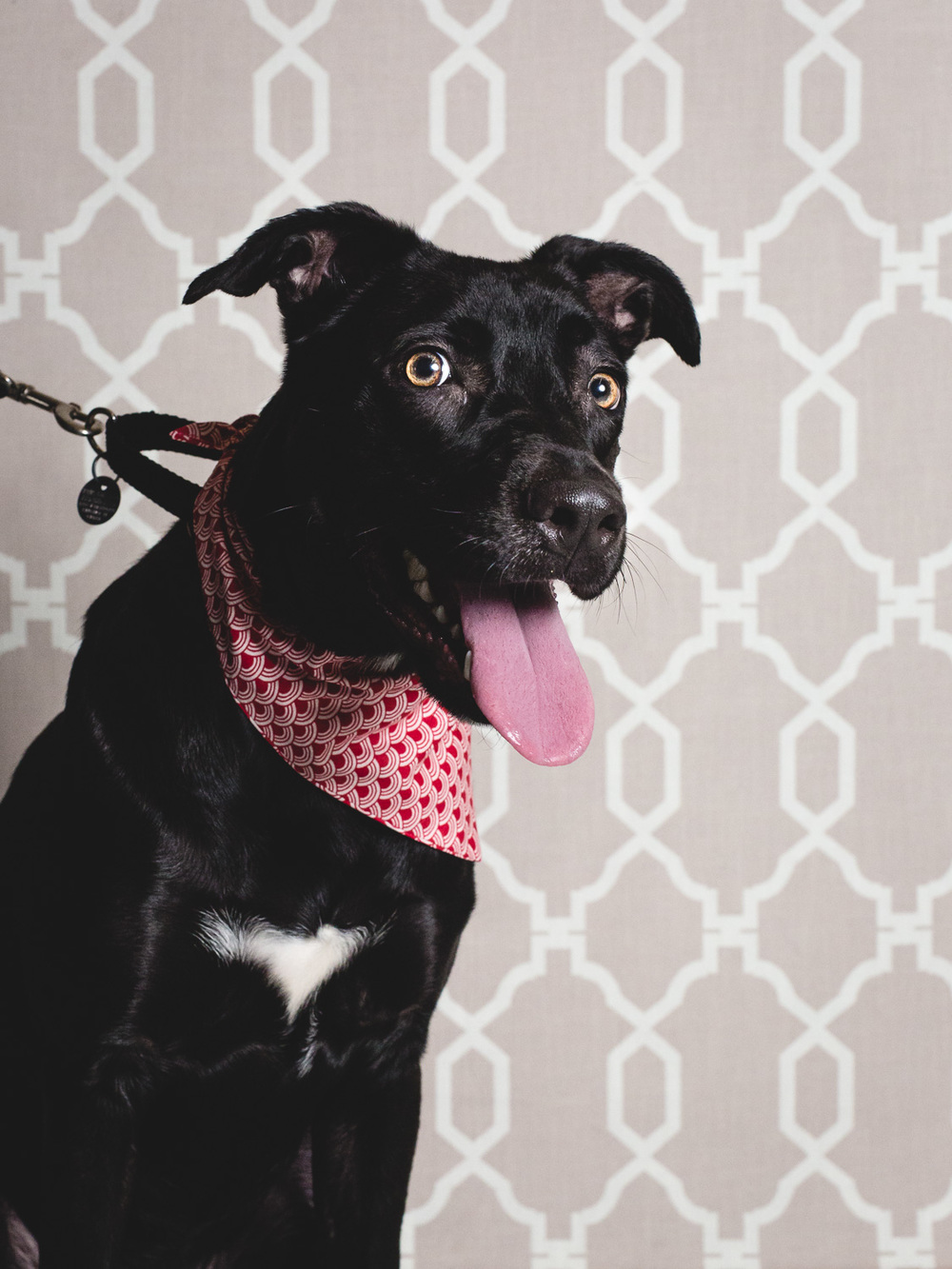 PAWS Chicago Looking For Foster Home