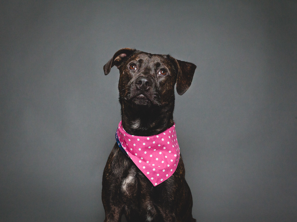 Adoptable Terrier Mix At PAWS Chicago