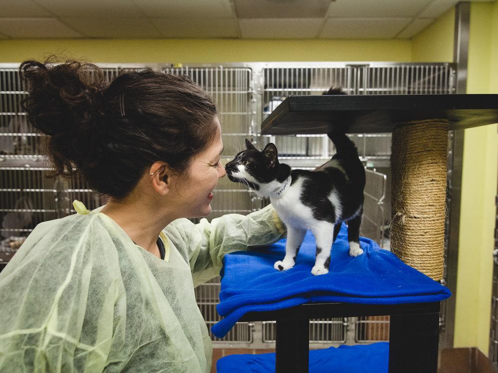 Salvatore, Chicago Animal Care and Control