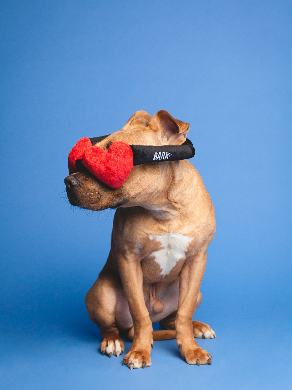 Chicago Dog Photographer