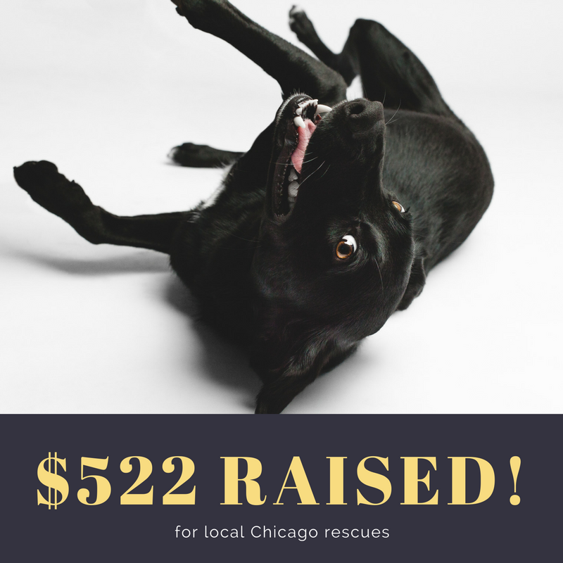 AMSTAPHY, Pet Photography raises money for local Chicago Rescues
