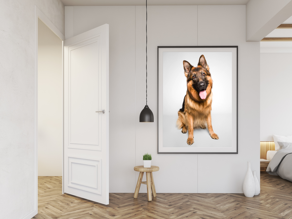 German Shepherd Dog wall portrait by AMSTAPHY pet photography in Chicago