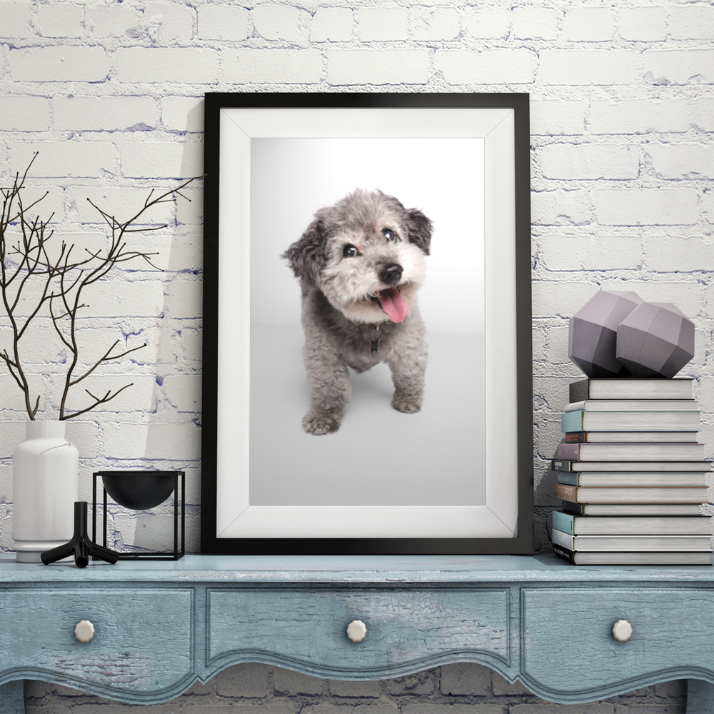 Pet Wall Portraits by AMSTAPHY pet photography