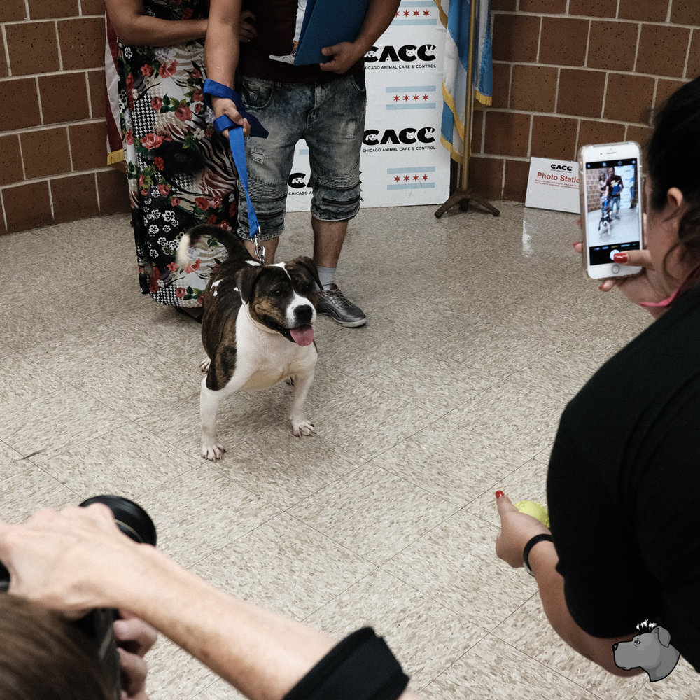 clear-the-shelters-chicago-00015.jpg