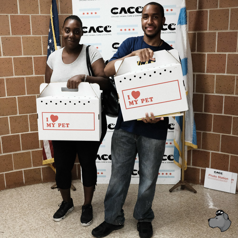 clear-the-shelters-chicago-00028.jpg