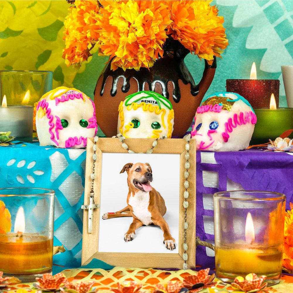 Pet altar at Dia de los Pets in Chicago